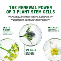 The renewal power of 3 plant stem cells. Read more online now! Body Shop At Home, The Body Shop, Best Body Shop Products, Beauty Products, Body Shop Australia, Body Shop Skincare, Face Mist, Stem Cells, Skin Care Regimen