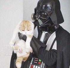 Star Wars Darth Vader Cat