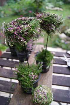 Gestern gab es Besenheide (Calluna vulgaris) im An… Fall Home Decor, Autumn Home, Fall Flowers, Dried Flowers, Grave Decorations, Modern Flower Arrangements, Deco Floral, Woodland Garden, Decoration Table