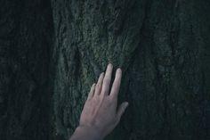 przytulanie drzew efekty