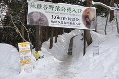 Snow Monkeys in Japan: Ultimate Guide for Visiting Jigokudani Snow Monkey Park Monkey Park Japan, Snow Monkey Park, Snow Monkeys Japan, Japan Travel Tips, Visit Japan, Japanese, Entrance, Japan Trip, November