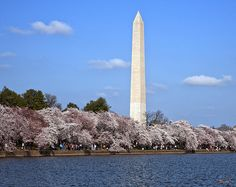 2012 Photograph, Washington Monument from the Tidal Basin, Cherry Blossoms on the Tidal Basin with the Washington Monument in the background, Washington, D. C. © 2012.