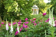 Peonies and foxgloves beneath the Temple of Aeolus, Kew Gardens. This image was a prizewinner in the International Garden Photographer of the Year competition.
