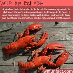 Lobsters are one of the weirdest animals - WTF fun facts