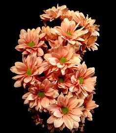 Salmon Liniker Peach Flowers, Peach Colors, Buy Roses, Pink Roses, Wholesale Roses, Favorite Color, Orange, Plants, Terracotta