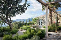 romero, lavanda, rosales, plantas sin problemas de mantenimiento para jardines continentales