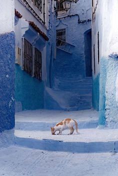Calico cat . . . Chefchaouen, Morocco by Steven Boone