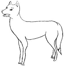 image result for dingo drawing outline