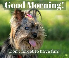 Good Morning. Don't forget to have fun!