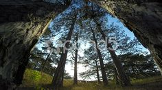trees in the forest, dolly 6 - Stock Footage | by operator1975