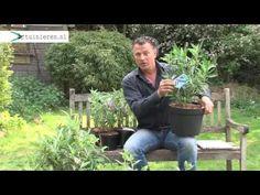 Clematis snoeien: hoe snoei je een clematis? - Tuinieren.nl - YouTube Clematis, Ecology, Allotment, Plants, Winter, Youtube, Food, Gardens, Flowers
