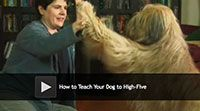How to Teach Your Dog to High-Five