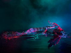 Reptiles get some glamour shots with Andrew McGibbon's technicolor photography.