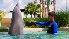 Nade com os golfinhos no Miami Seaquarium!