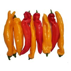Ramiro sweet Giant pepper Seeds  2,05€  Ramiro sweet Giant pepper Seeds Price for Package of 10 seeds. Ramiro sweet pointed peppers are a sweet variety of the common pepper. Higher sugar content their taste is sweeter than that of normal peppers. They have a longish pointed shape and exist in three different colours, red, yellow, green. Ideal for salads, grilled or as finger food. Also very decorative as
