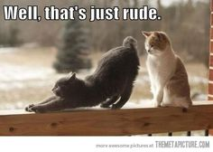 LOL my kitties are rude all the time!