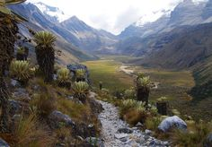 Cocuy. Community Post: A Trip Through The Land Of Magical Realism