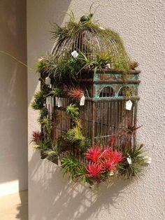 Birdcage Tilandsia Garden
