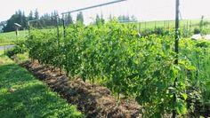 39 Best DIY Garden Trellis Ideas To Consider[Listicles]