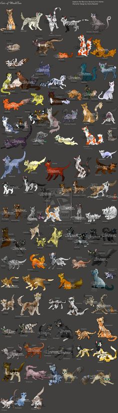 Warriors of WindClan by JB-Pawstep on DeviantArt