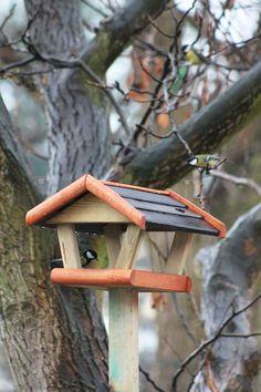 puu, vesi, luonto, haara, talvi-, lintu, puu, puun lehti, villieläimet, ateria, kevät, kausi, eläimistö, lintuja, lintu syöttölaite, siepot, lintujen ruokinta tarjotin, perching lintu, Sikora