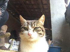 Bir kedi gördüm sanki:))