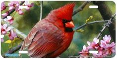 3154 - cardinal Novelty License Plates, Animals, Animales, Animaux, Animal, Animais