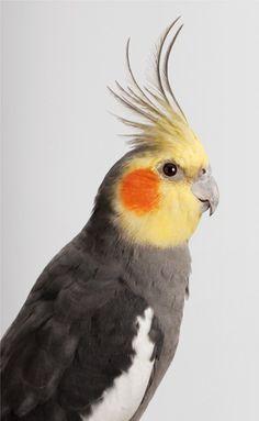 Maravillosos Retratos de Aves por Leila Jeffreys