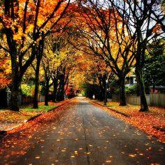 Autumn season - Fall leaves and colors. A street I'd really like to walk down : ) Beautiful.