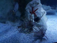 Lion Fish - NubesDesignCH Marine Fish, Cool Designs, Lion, Landscape, Gallery, Sexy, Animals, Photographs, Leo