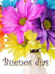 Beautiful Flowers Pictures, Flower Pictures, Beautiful Butterflies, Good Morning Friends, Good Morning Quotes, Archangel Prayers, Weekday Quotes, Tribe Of Judah, Spanish Quotes