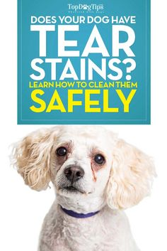 How To Clean Dog Tear Stains Video
