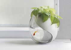 planter and fish bowl - This designed planter and fish bowl by Sheng-Zhe Feng and Ling-Yuan Chou is a great pet habitat. Plants and fish have long co-habited and no. Aquarium Design, Glass Aquarium, Nature Aquarium, Planted Aquarium, Aquarium Ideas, Nachhaltiges Design, House Design, Yanko Design, Design Ideas