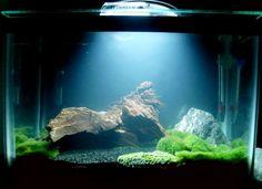 Images About Aquariums On Pinterest Aquascaping Aquarium And Aga