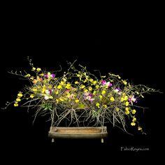 Plants: image 1 0f 4 thumb
