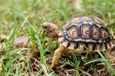 Beautiful box turtle...makes me think of my dear departed Harry