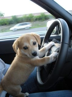 thecutestofthecute: Dogs and cars! | 日々是遊楽也