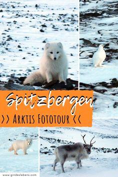 Abenteuer Arktis im Winter auf Spitzbergen! Unglaubliche Begegnungen mit der arktischen Tierwelt – Schneehühner, Polarfüchse und Rentiere in freier Wildbahn bei einer unglaublichen Arktis Fototour erleben. Spitzbergen ist eine Inselgruppe im Nordatlantik und Arktischen Ozean, die von Norwegen verwaltet wird. Unvergessliche Erlebnisse und mehr auf www.gindeslebens.com #Spitzbergen #Arktis #Norwegen #Winter #Svalbard Longyearbyen, Tromso, Photo Story, Best Cities, Eastern Europe, Places To Go, Wildlife, Travel Europe, History
