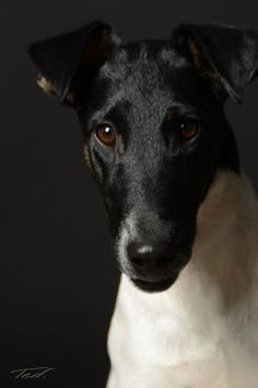 Head shot of my dog Joey - sample of the work done by On the Spot Studios