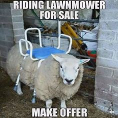 Ride-on mower stands for sale # fun # animals - WITZIG - Funny Animal Memes, Funny Animal Videos, Videos Funny, Funny Dogs, Funny Animals, Cute Animals, Funny Cute, Hilarious, Animals