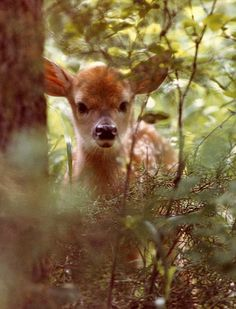 wouldn't mind running into this baby deer while camping !