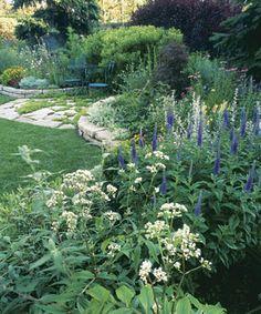Sun & Shade - Fine Gardening Article