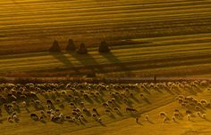 sheeps at sunset by Ovidiu Caragea on 500px