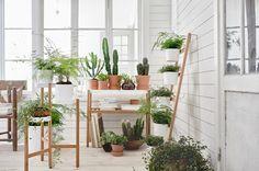 Desain taman dalam rumah perlu diterapkan agar hunian terasa lebih asri dan udara menjadi lebih segar. Intip inspirasi desain taman dalam rumah yang bisa kamu terapkan berikut.