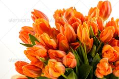 Realistic Graphic DOWNLOAD (.ai, .psd) :: http://vector-graphic.de/pinterest-itmid-1006896346i.html ... Bunch of spring tulips flowers ...  Liliaceae, Tulipa, bouquet, bunch, copy-space, flora, flower, fresh, freshness, isolated, nature, no people, nobody, object, orange, plant, spring, tulip, white background, yellow  ... Realistic Photo Graphic Print Obejct Business Web Elements Illustration Design Templates ... DOWNLOAD :: http://vector-graphic.de/pinterest-itmid-1006896346i.html