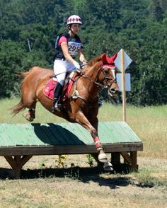 Ferrari, a Secretariat descendant & OTTB rescued from a bad situation, who's now finding a home on the cross-country course.