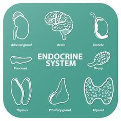 Re-balancing the endocrine system for optimal health(Photo: iStockphoto) So often, patients drag themselves into my office complaining of multiple symptoms like thinning hair, brittle nails, erupting skin, poor sleep, exhaustion, constipation, sexual or menstrual dysfunction and weight gain.  These