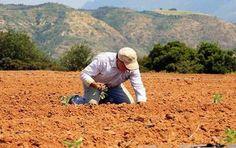 Τι αλλάζει στην ασφάλιση για τους αγρότες που απασχολούνται και ως μισθωτοί