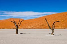 arbre mort en Namibie