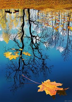 Fall leaves in reflections